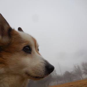 霧の朝、パピコーちゃんが跳ぶ
