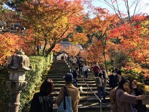 炊飯器の品定めと 晩秋の京【永観堂編】