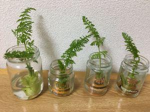 野菜たちの 第二の人生