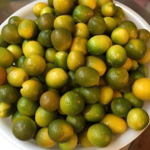 金柑は天然のビタミン剤