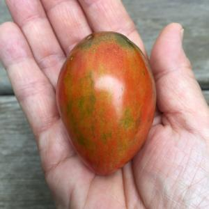 初めてのエアルームトマト栽培