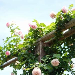 【平塚】紫陽花が見頃です「花菜ガーデン」