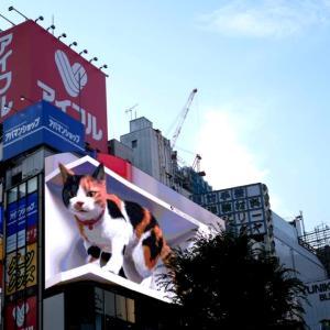 【新宿】本日より本放映スタート!新宿の猫「ニャジラ」