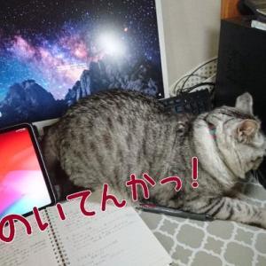 テレワークで困ること、猫が邪魔をする~~