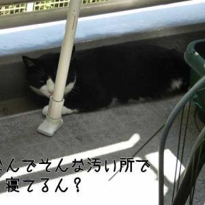 野良猫みたいなぐんちゃん