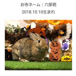 """""""第12回お寺のうさちゃん移送"""""""