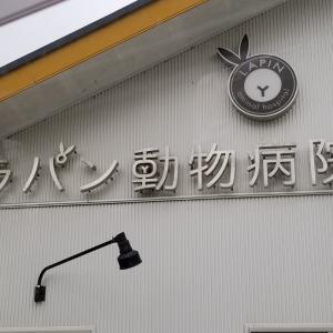 ラパン動物病院