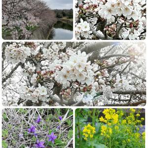 こんな時だけど(こんな時だから)春を楽しむ