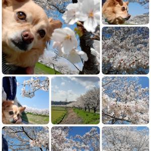 お花見散歩で 気分をあげる