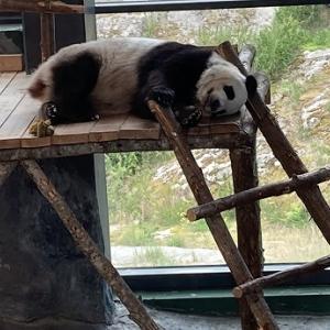 Ähtäri動物園(再びパンダ)とショッピングセンターTuuri