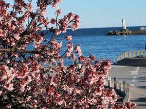 早春の熱海/ Early spring in Atami hot spa resort