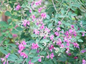 秋の七草 Seven herbs of autumn