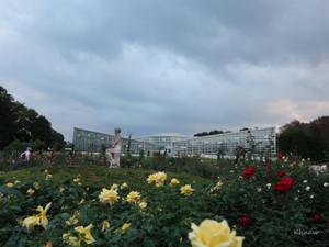 日がな一日、神代植物園で楽しみました。I relaxed in a Botanical garden in a good autumn day.