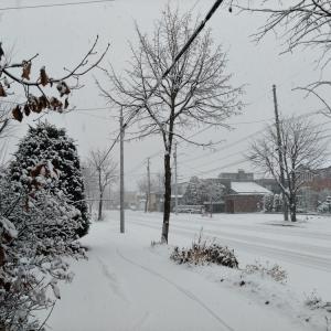 雪の休日 みよしの餃子