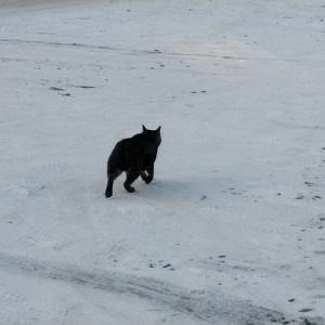 北海道のネコはマイナス14℃でも元気