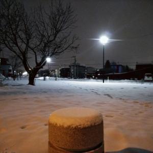 雪が降った 今朝少しだけ執筆した