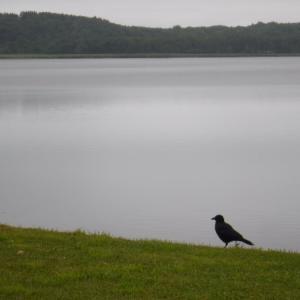 旅8日目 クッチャロ湖にて朝 今日はのんびりしよう