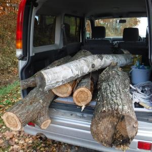 路傍の巨木を拾った 阿寒湖のリゾバが決まった 日