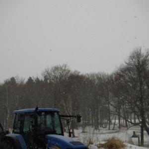 ルパンの町で牧場10日目 ちょっと雪降ってる