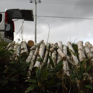 白樺をひたすら集める 動画「薪集めでヘトヘト 『日々旅にして旅をすみかとす』」