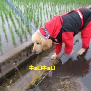 朝は大雨、夕方は梅雨の晴れ間の散歩 !