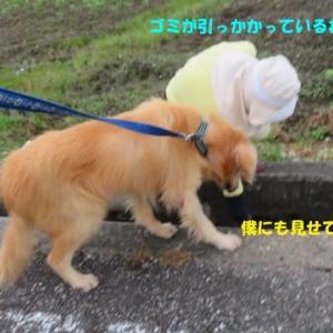 """恒性皇子御陵墓前の""""石""""に用足し!"""