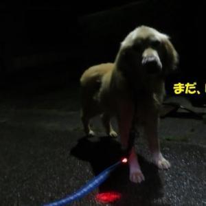夏なのに暗闇散歩の理由 !