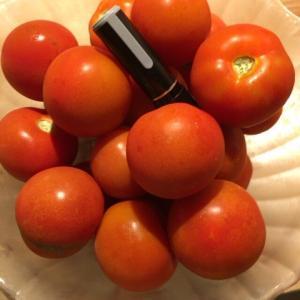 [収穫開始]フルティカ