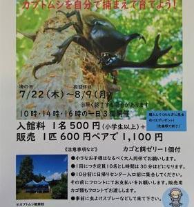 ひめかゆ温泉でカブトムシ観察会