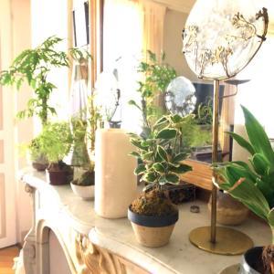花や緑と共に♥️好きなものに囲まれて暮らすNo4