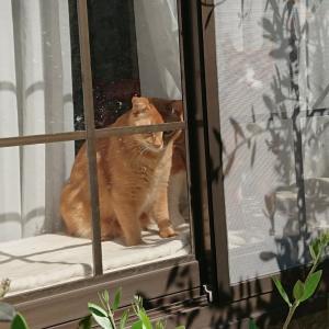 市川市のペットシッター 保護猫3人衆