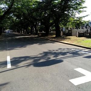 寛永寺から谷中霊園散歩  最終回  紅葉坂