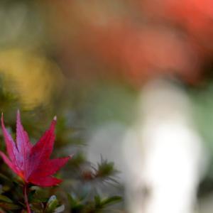 観心寺の紅葉 3