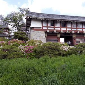 伏見城 6 昭和の伏見桃山城
