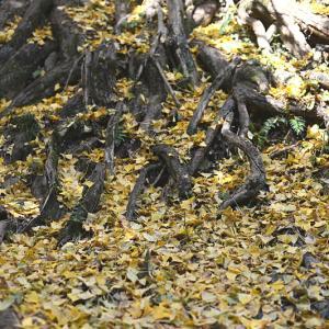 流谷八幡神社の紅葉 2
