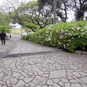 福岡城(日本100名城) 12  最終回 樹木所から黒田官兵衛隠居所跡