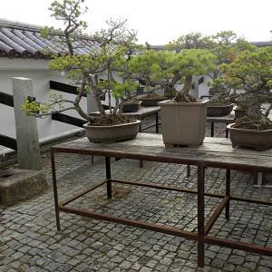 会津若松城(日本100名城) 7 天守から月見櫓跡まで