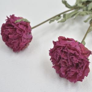 5月の新着花材第3弾