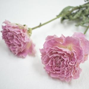 6月の新着花材第3弾