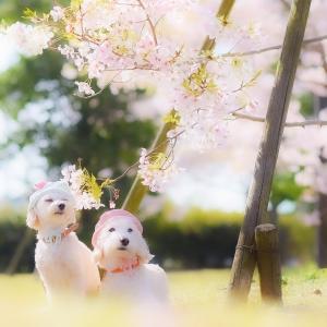 花より団子な4月の春