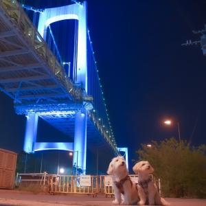青く輝く都内の夜景(医療関係者の応援ライトアップ)