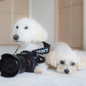 ついに!!新しいカメラ『SONY a7Ⅲ』を買ったよ!! がしかし…