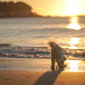 朝焼けのビーチをお散歩