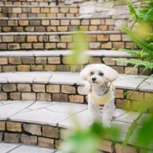 愛犬と鎌倉の絶品イタリアン