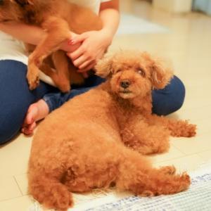 <里親募集中>保護犬のマラマちゃん