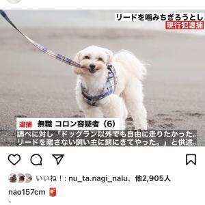 【衝撃】続々と逮捕された愛犬たち!!
