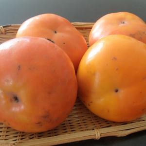 フルーツ好きのマミママ、柿を猛食♪