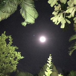 バリ島の樹々の緑に映えるピンクムーン