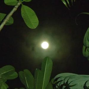 Mystical harvest moon
