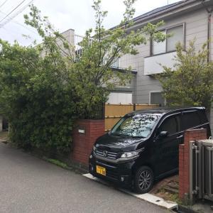 新潟市中央区での庭木伐採風景